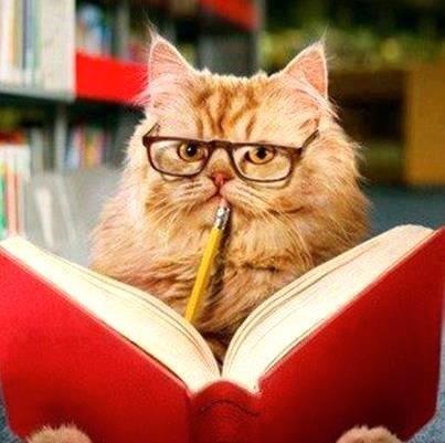 smarta katter