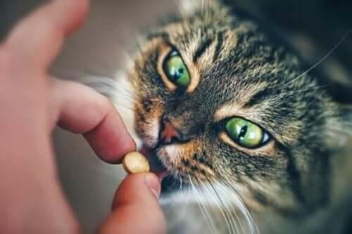 p piller till katt