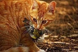 katter skadedjur